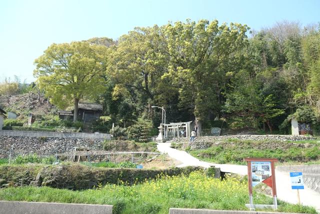 豊島003