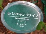 ローズガーデン2014秋 042