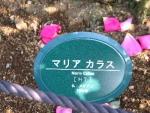 ローズガーデン2014秋 044