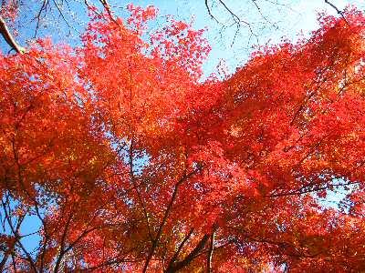 丹沢湖紅葉2014 002
