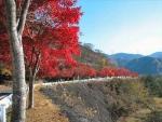 丹沢湖紅葉2014 003