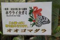 オキナワ 10