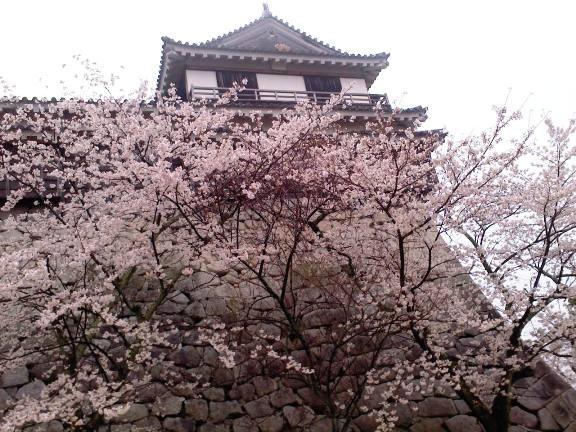 松山城の桜2013-4
