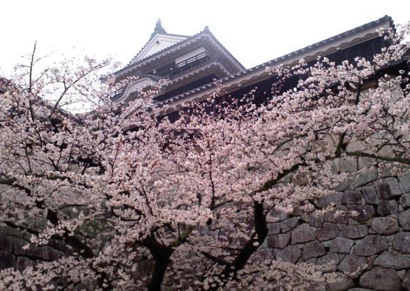 松山城の桜2013-5
