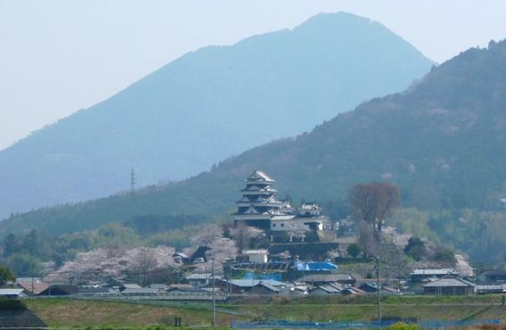 \大洲城の桜