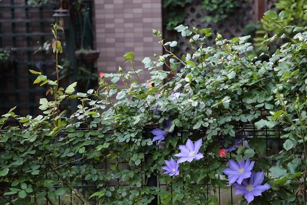 横浜の庭3 H.F.ヤング