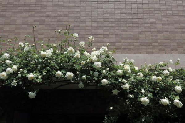 GW@横浜の庭3