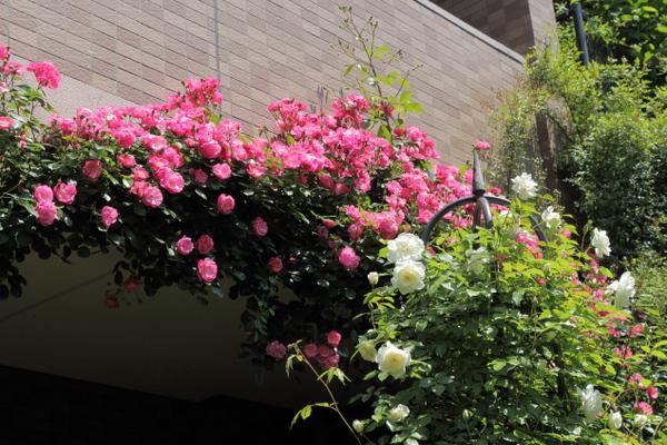 GW@横浜の庭4