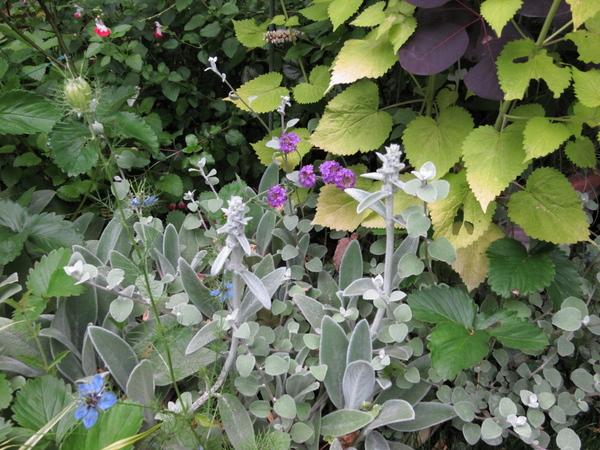 フェンス前花壇