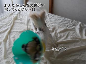 20130806_5.jpg