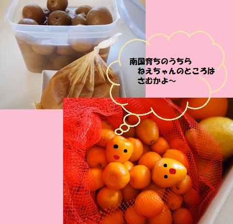 金柑とカリカリ梅