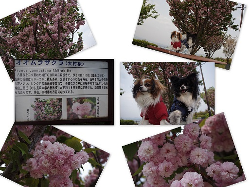 2013-04-12 筑紫野にて