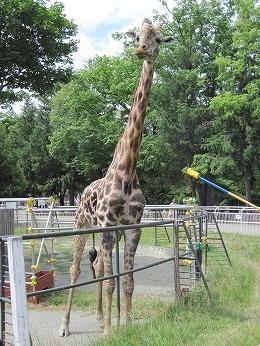 円山動物園 007