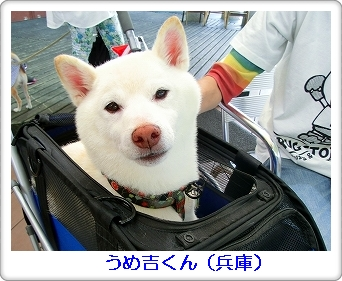 柴柴会in蒜山 030