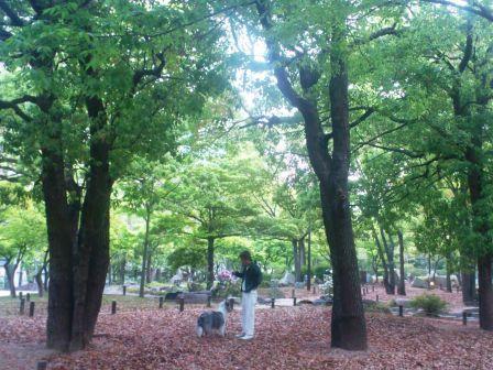 DSC_4770(BOSSと中央公園で)