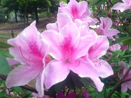 DSC_4754(お花①)