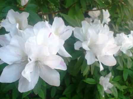 DSC_4751(お花②)