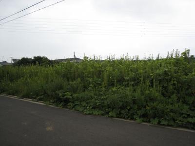 陣場G29-3