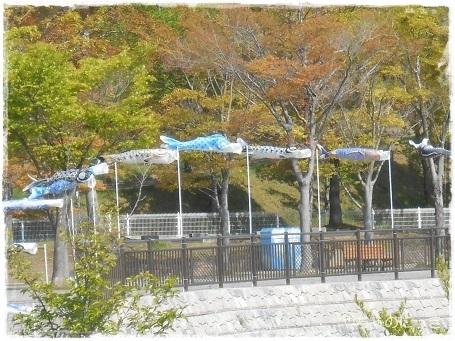 20130503生駒山麓公園こいのぼり