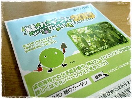 20130505緑のカーテン