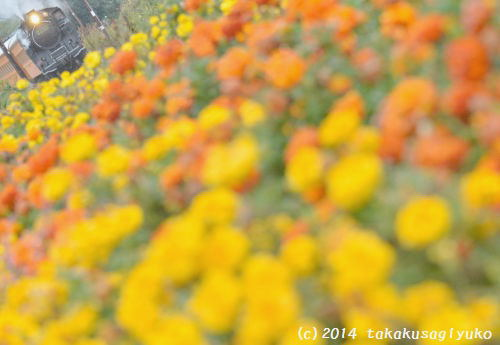 DSC_3453_01.jpg