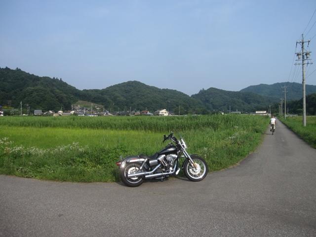 suzumi2.jpg