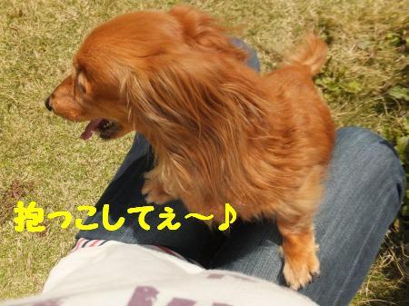DSCF0048_convert_20130418103237_20130418115528.jpg