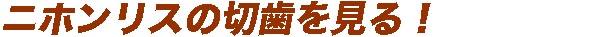 taitoru-d.jpg