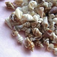 ベビー貝殻