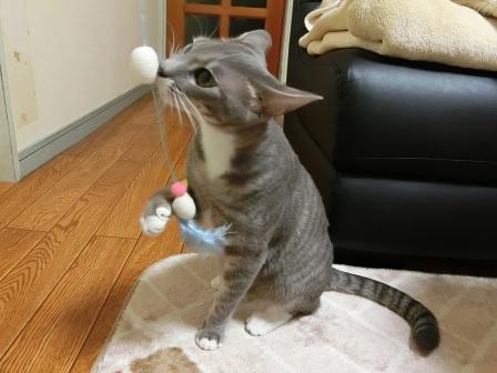 1503おもちゃ (2)