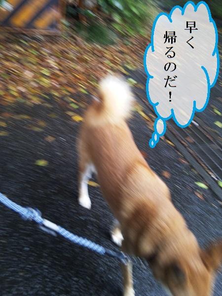 DSC_0630a.jpg