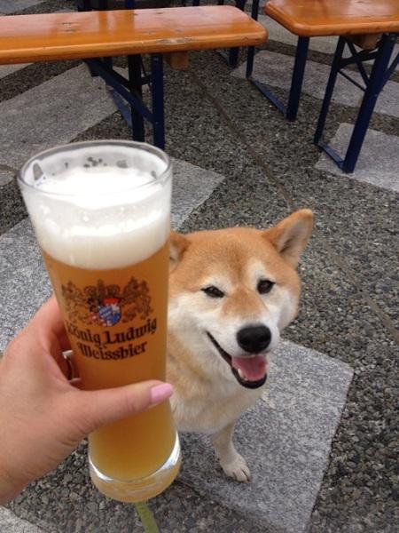 beer2013.jpg