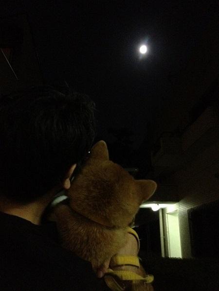 harvest-moon.jpg