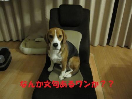 IMG_4680_convert_20130213182847_convert_20130616091138.jpg