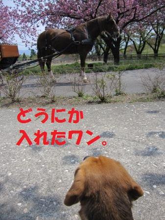 IMG_5173_convert_20130512222205.jpg
