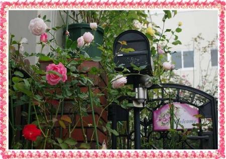 rose1117 003