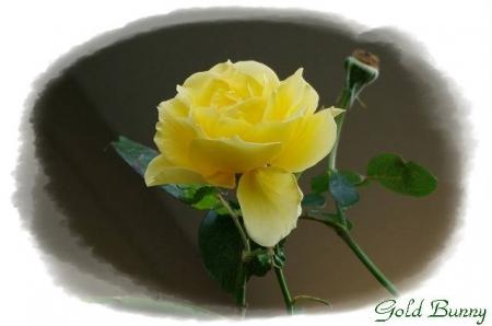 rose1117 010