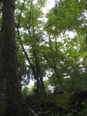 こ~んな森の中で・・・