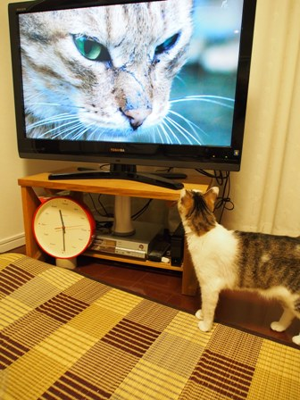ウ~だの アォ~だの 言いまくっているノラ猫