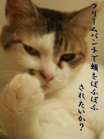 キャー!乙女様ー!!ヾ(*≧∀≦*)ノ