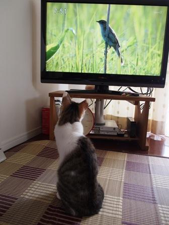 はい、鳥さん来たー!