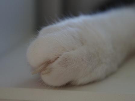 けっこう指が長そうですね~