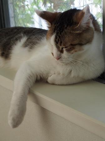 眠くなるのよ・・・・だって猫だもの