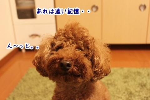 IMG_9871_201308231220072bb.jpg