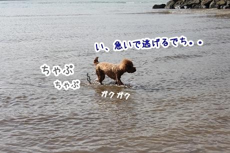 IMG_9979_20131023114543a43.jpg