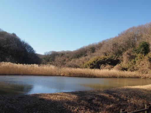 20140119・緑森空01・博物館水鳥の池