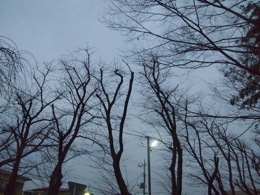 20140125・散歩26