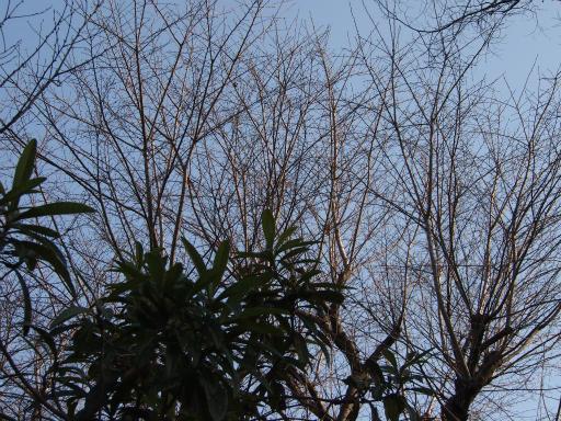 20140201・散歩01