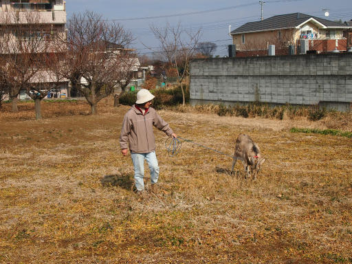 20140202・自然観察会15・ヤギのシバちゃん
