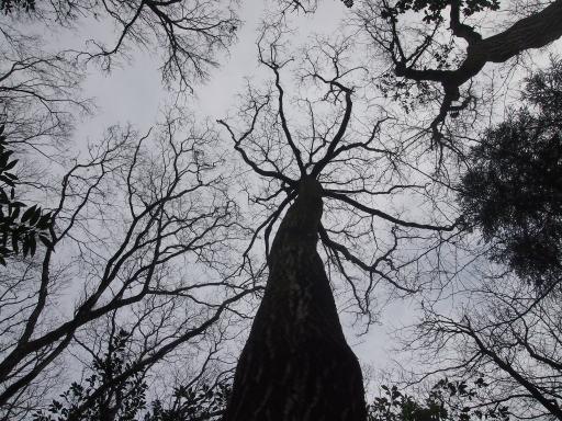 20140202・自然観察会空1